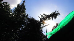 Time Lapse Sunlight Lens Flare Palm Trees And Roof Silhouette Clouds Sky - stock footage