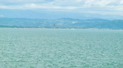 Sea Bird Wildlife in Puntarenas Costa Rica Stock Footage