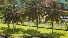 Colon Panama Tropical Roadside Palm Trees Stock Footage