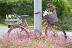 Muted pink bicycle with flowers Bud Norway Europe Stock Photos