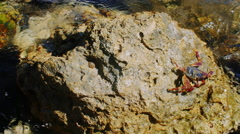 Edge sits on a rock on the coast of the Red Sea Stock Footage
