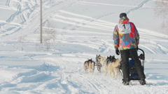 Team of husky sled dogs with dog-driver Stock Footage