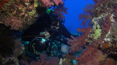 Scuba diver looking through a coral reef hole - Red Sea, Sudan Stock Footage
