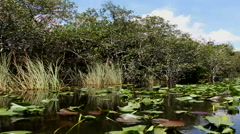 Landscape of Everglades in Florida Stock Footage