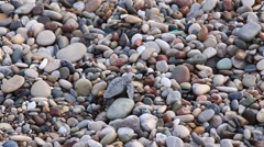 Loggerhead Turtle baby ( Caretta carretta ) crawls to the sea. Cirali, Turkey Stock Footage
