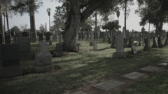 Tilt Down from Tree to Cemetery - Film Log Stock Footage