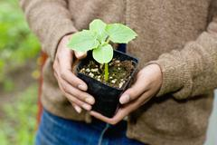 Japanese gardener holding potted plant - stock photo
