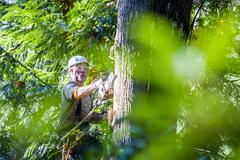 Logger using chainsaw on tree Stock Photos
