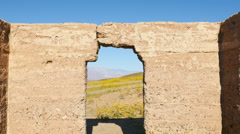 Stock Video Footage of Dolly Pan of Abandon Ashford Mill & Wildflowers  Daytime  - Death Valley