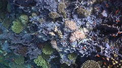 Dead corals on coral reef. Sick coral gardens Stock Footage