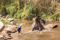 Elephants show daily activities Stock Photos