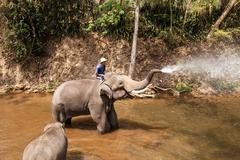 Elephants show daily activities Stock Photos
