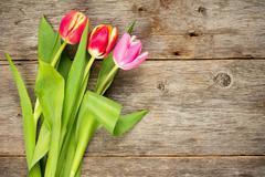 Stock Photo of Three beautiful tulips on wooden background