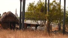 Village in Myanmar near Bagan town Stock Footage
