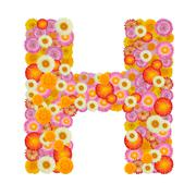 Letter H alphabet with straw flower isolated on white background - stock photo