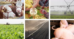 Agriculture - Food Production Splitscreen Stock Footage