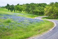 Texas bluebonnet field along curvy country road - stock photo
