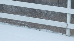 Deer Eating Grass Grazing Behind Back Yard Fence In Winter Snow - stock footage
