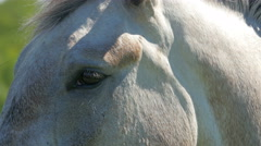The eyes of the white horse Stock Footage
