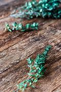 Green thyme sprig - stock photo