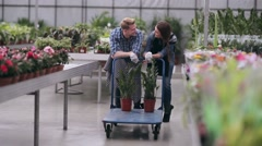 Two florists with trolley in greenhouse Stock Footage