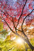 Colorful autunm treetops. Stock Photos