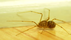 Extreme macro spider walking across the floor Stock Footage