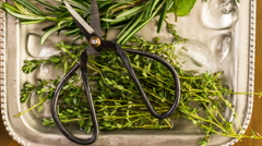 Tray with fresh mint, rosemary, thyme, and sage. Stock Footage