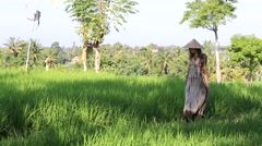 Beautiful girl in straw hat against the backdrop rice field.  Bali, Indonesia Stock Footage
