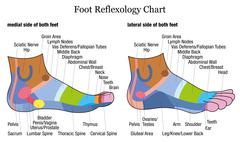 Foot Reflexology Side Profile Lateral Medial View - stock illustration