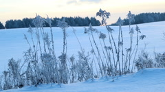 Dry grass covered with snow Stock Footage