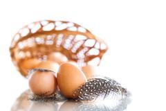 Eggs of a guinea fowl Stock Photos