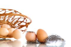 Eggs of a guinea fowl - stock photo