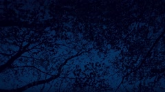 Moving Under Woodland Trees In The Dark Stock Footage