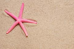 Sea shells on sand.red and yellow  Shell  Starfish Stock Photos