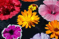 Colorful flowers with dew  drops Stock Photos