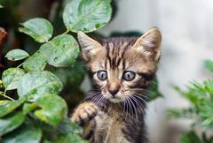 Brown stripes cute kitten walking on the grass Stock Photos