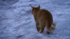 Cat walks in the snow Stock Footage
