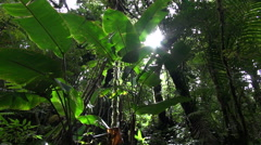 rainforest plants, tree and leafs from below - Costa Rica jungle - stock footage