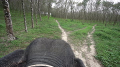 View of elephant ride through rainforest. Thailand Stock Footage