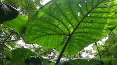 rainforest plants and leafs from below - Costa Rica jungle - stock footage
