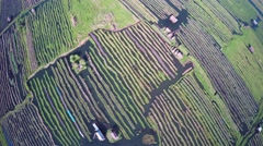 Flying up over floating gardens on Inle Lake Stock Footage