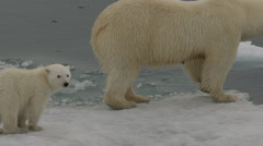 Slow motion - Polar Bear cub sits on ice as it waits on edge of sea ice Stock Footage