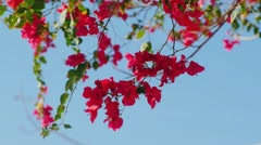 Exotic flowers on a background of blue sky Stock Footage
