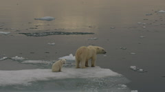 Slow motion - Polar Bear mother and cub leave ice edge to stare at camera Stock Footage