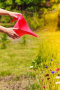 Woman hands watering plants in garden Stock Photos