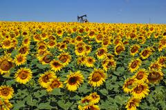 Oil Rig and Sunflower Filed - stock photo