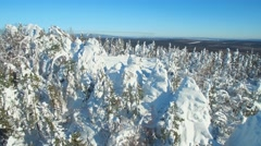 Rising above the tops of snowy forest on a clear day Stock Footage
