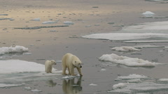 Slow motion - medium of polar bear and cub on ice edge with reflection Stock Footage