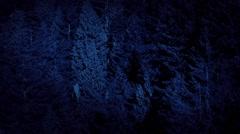 Aerial Above Tall Forest Trees At Night Stock Footage